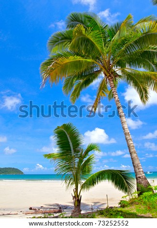 Big and small palm trees on idyllic white sand beach. Exotic vacation.