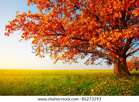 Big autumn oak and green grass on a meadow around - stock photo