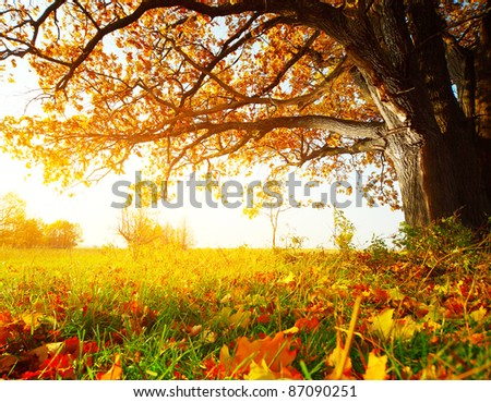 Big autumn oak and green grass with yellow leaves on a meadow around - stock photo