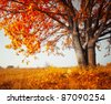 Big autumn oak and yellow grass on a meadow - stock photo