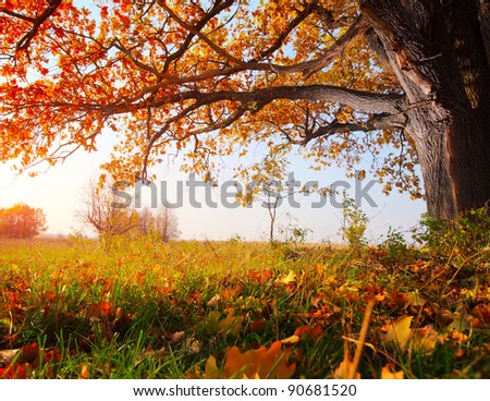 Big autumn oak with yellow leaves on a meadow - stock photo