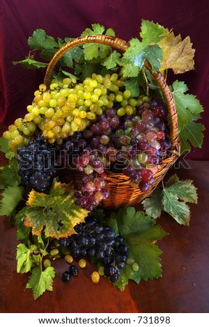 big basket full of different wine grapes and leaves
