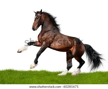 Big bay Vladimir Heavy Draught  horse in field - stock photo