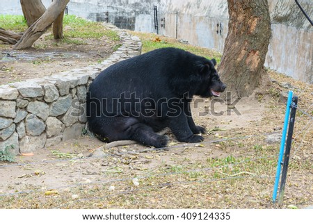Big bear in a park
