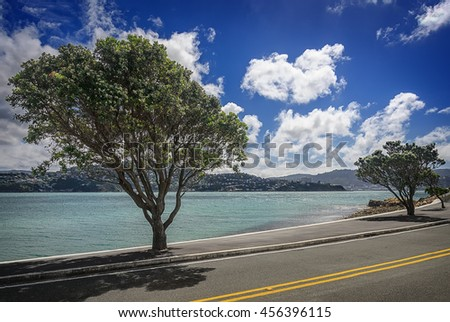 Big beautiful trees along the coast in Wellington at sunny day. New Zealand - stock photo