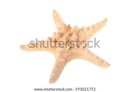 Big beige starfish isolated on white - stock photo