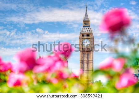 Big Ben, the Palace of Westminster in London, UK. View from a public garden with beautiful roses flowers at sunny spring, summer day. - stock photo