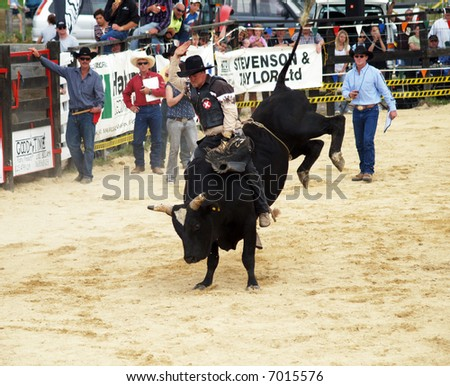 Big Black bull with a cowboy on his back - stock photo