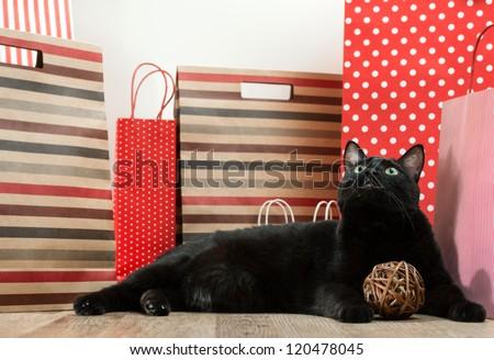 Big black cat laying among shopping bags - stock photo