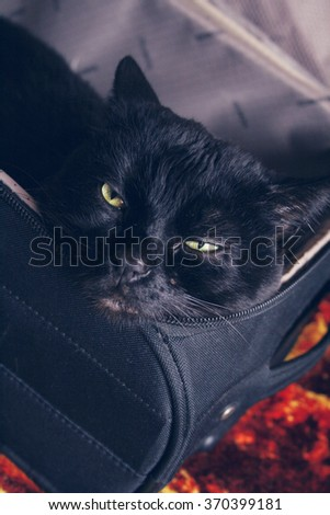 Big black cat sleeping in the suitcase