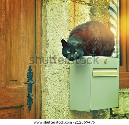 Big black street cat jumped on house post box. Filters applied - stock photo