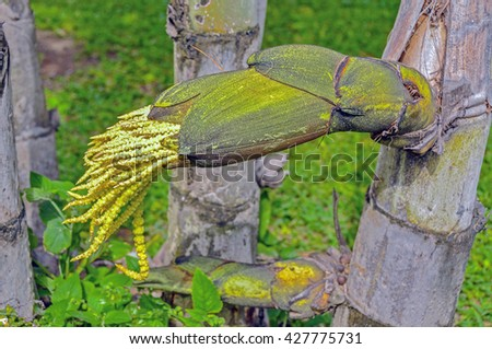 Big blooming palm tree with bud flower - stock photo