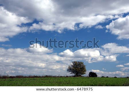 big blue sky with white clouds ans a narrow strip of grass with a tree and a bush