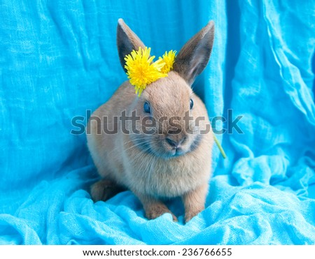 Big brown rabbit on blue background with dandelions