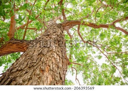 Neem tree essay
