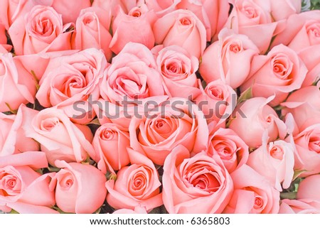 big bunch of multiple pink roses of a bride on a wedding from top, of bridal photos series - stock photo