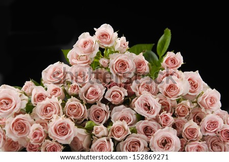big bunch of multiple pink roses on black - stock photo