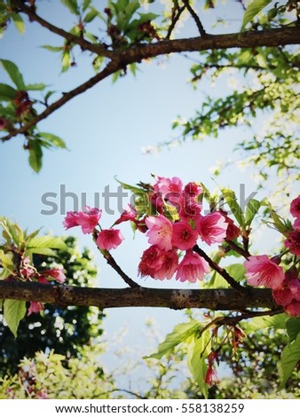 Rim Red Flower Petal Jug Quite Stock Photo 416940205