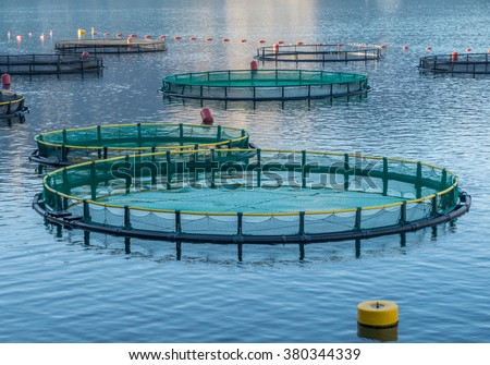 Big Cages for fish farming in Montenegro - stock photo