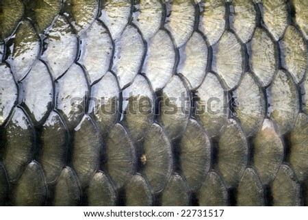 Real roach fish scales background stock photo 140172256 for Mlf fishing scale