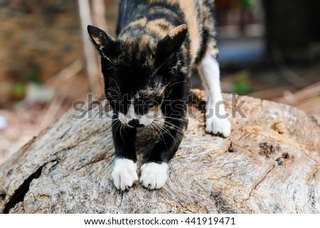 Big cat on the wood - stock photo
