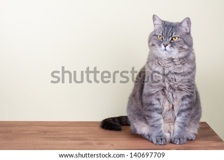 Big Cat with yellow eyes sitting on table portrait - stock photo