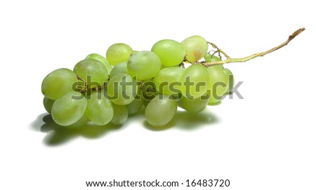 Big cluster of wine grapes isolated on white background