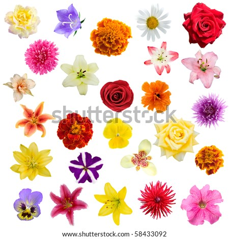 Big collage from  flowers on a white background.