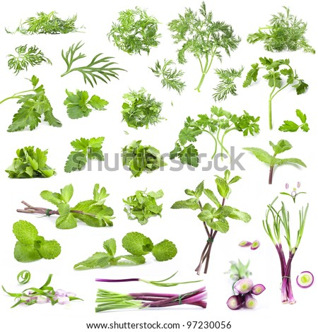Big collection leaves parsley, mint, dill and onion isolated on white background, closeup, macro - stock photo