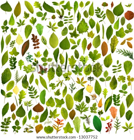 Big collection of different leafs - stock photo