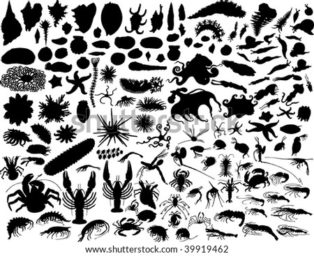 Big  collection of different mollusks and other invertebrates - stock photo