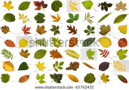Big collection of leaves isolated on white background - stock photo