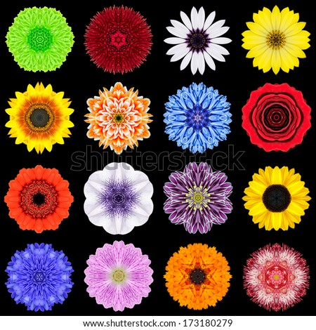 Big Collection of Various Colorful Flowers. Kaleidoscopic Mandala Patterns Isolated on Black Background. Concentric Rose, Daisy, Primrose, Sunflower, Carnation, Marigold, Flowers in mixed colors. - stock photo