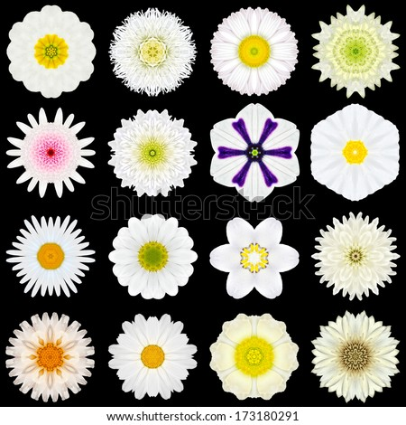 Big Collection of Various White Flowers. Kaleidoscopic Mandala Patterns Isolated on Black Background. Concentric Rose, Daisy, Primrose, Sunflower, Carnation, Flowers in Yellow and White colors. - stock photo