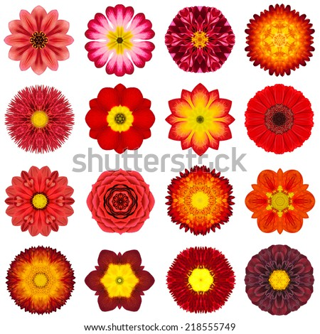 Big Collection of Various Yellow Concentric Pattern Flowers. Kaleidoscopic Mandala Patterns Isolated on White Background. Concentric Rose, Marigold, Gerber, Dahlia in Yellow colors. - stock photo