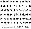 Big collection  silhouettes of dogs with breeds description - stock vector