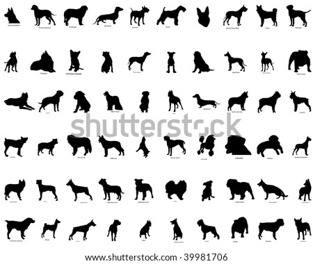 Big collection  silhouettes of dogs with breeds description - stock photo