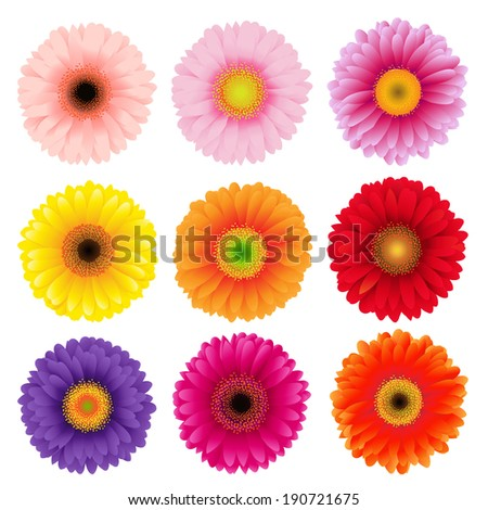 Big Colorful Gerbers Flowers Set - stock photo