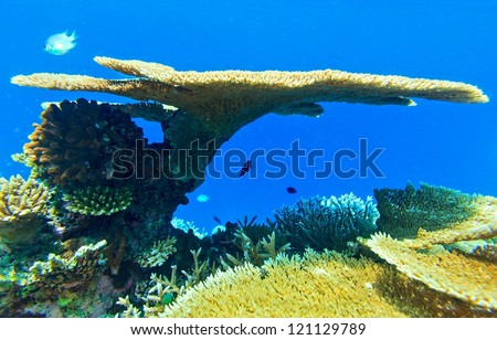 Big coral and small fishes in the Indian Ocean - stock photo