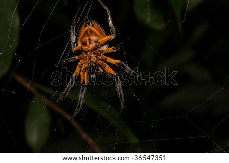big creepy spider on his web at night in the rain forest