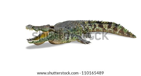 Big crocodile isolated on white with clipping path included - stock photo