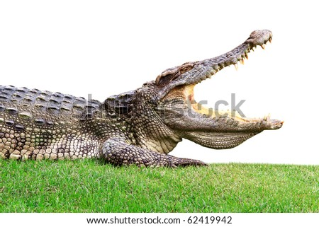 Big crocodile on green - stock photo