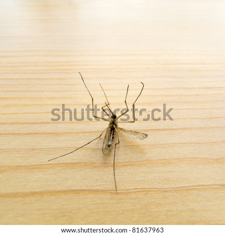 Big dead mosquito laying on its back on wooden board. - stock photo