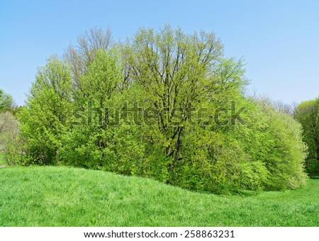 Big deciduous tree on green grass meadow - stock photo