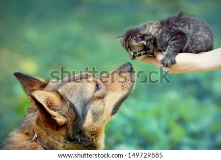 Big dog and little kitten in female hands sniffing each other outdoor - stock photo