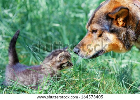 Big dog and little kitten sniffing each other on the grass