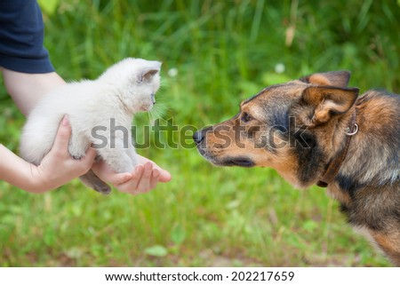 Big dog and little white kitten in female hands looking at each other outdoor - stock photo