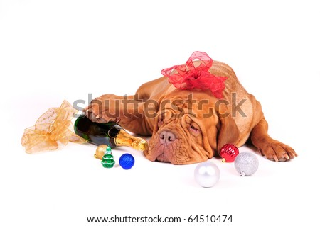 Big Dog is Ready for Christmas - stock photo