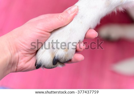 big dog paw in human hand closeup