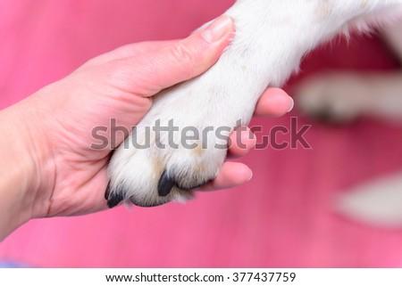 big dog paw in human hand closeup - stock photo